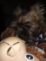 2012-07-15 adorable pic of TT and her monkey.06.jpg