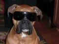 Copper Sunglasses.JPG