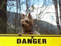 Dangerous Buddy.JPG
