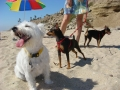 Dog Beach 004.jpg