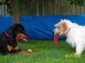 Dottie & Max playdate (15).JPG
