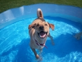 First plunge in the pool.JPG