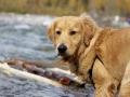 Griffin Explores Autumn at Bragg Creek.jpg