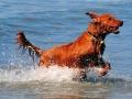 Hopper-Ocean.jpg