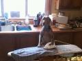 Jager Ironing My Shirt.jpg