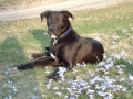 Max as cute as can be!.JPG