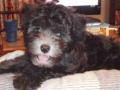 My Max 2009.JPG