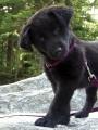 PerriMae_puppy.jpg
