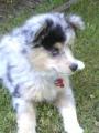Puppy! 015.jpg