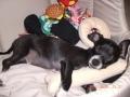 Q-tip Sleeping with Favorite Toy-1.jpg