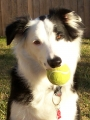 Rudy with ball.jpg