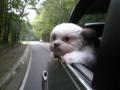 Rufus riding in car.jpg