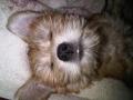 Sammy-Modern Dog.jpg