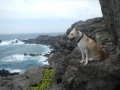 Sunday dog trek 043.JPG