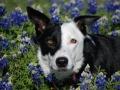 Texas puppy 2.jpg