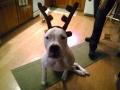 clancy reindeer.jpg