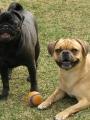 easter weekend- dogs 033.jpg