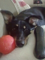 izzy remote and ball.jpg
