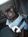 monty in his car seat!.jpg