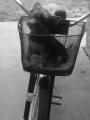 pooter riding.jpg