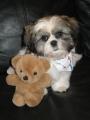 puppy 018.jpg