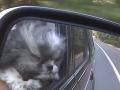 rascal in car mirror.jpg