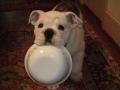vinny-bowl4.jpg