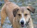 water dogs 045.JPG