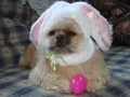 wicket and easter hat.JPG